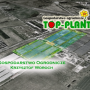 Topl plant – sadzonki frigo